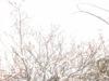 Eri Tsutsumy Drawing Exhibition   『Garden of Lights』